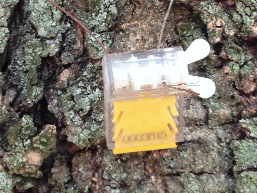 Verificación de olivo milenario